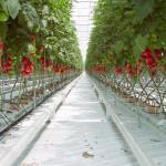 Сказка про овощной куст
